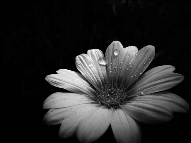 写真: ホワイト