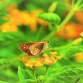 写真: 南海の島の蝶々 4