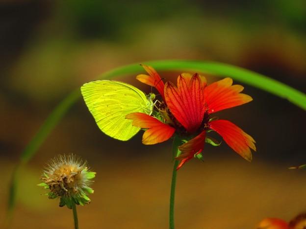 写真: 南海の島の蝶々 8