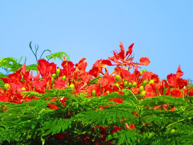 写真: 今日見た赤い色