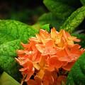 写真: 雨の日 オレンジ