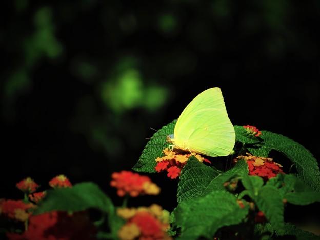 冬に出会った蝶 2