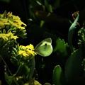 冬に出会った蝶4