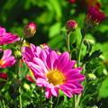 写真: 沖縄で冬に見た花