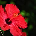 写真: 沖縄で冬に見た花 2