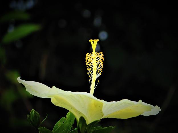 沖縄で冬に見た花 3