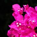 写真: 小さな花のお話