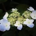 沖縄の春 暗
