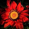 沖縄 春の花 赤