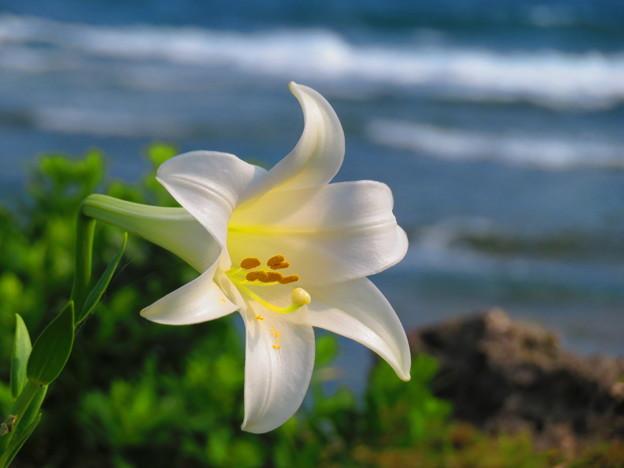 Photos: 沖縄の春はここまで来ました
