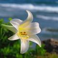 沖縄の春はここまで来ました