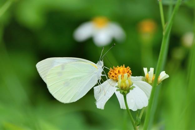 沖縄は緑と蝶々がいっぱい