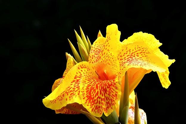 Photos: 沖縄の花