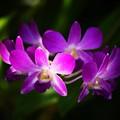 Photos: 沖縄で見た花