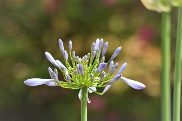 6月の花 ニコン