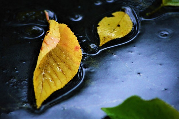 逆光…落葉