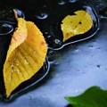 Photos: 逆光…落葉