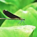 アウトフォーカス 蜻蛉