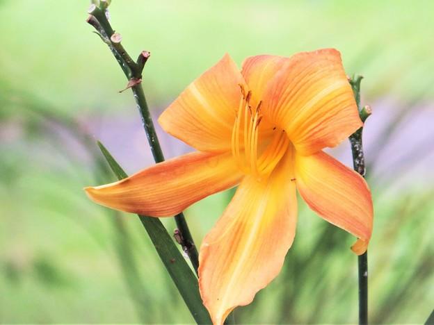 Photos: 花の名前は・・・