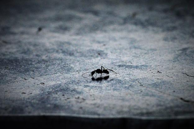 Photos: 蟻