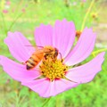 Photos: 沖縄で見た冬景色 ミツバチ 1月