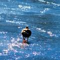 那須高原で見た冬景色 凍った池を歩く鴨