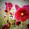 花のバス停