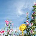 花のバス停2
