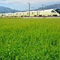 写真: 麦畑の四季島