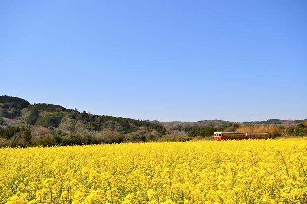 写真: 小湊鉄道の春景色2018a