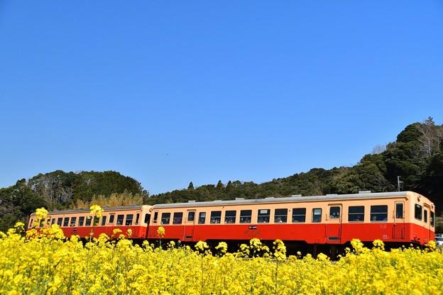 小湊鉄道の春景色2018b