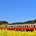 写真: 小湊鉄道の春景色2018b