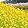 写真: 満開の花