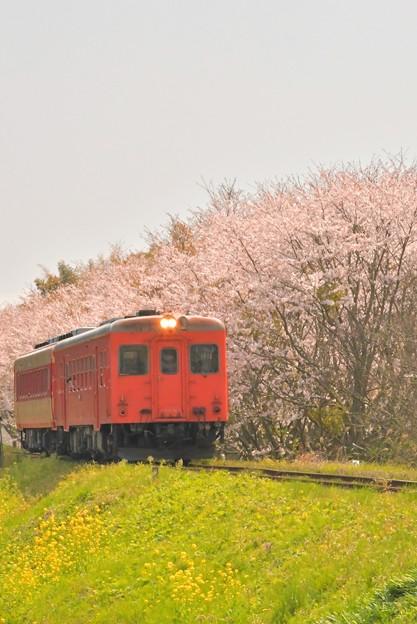 いすみ鉄道の急行2018春(トリミング前の元ネタ)