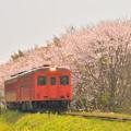 写真: いすみ鉄道の急行2018春(トリミング前の元ネタ)