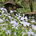 写真: 鎌倉ハイキング-2-