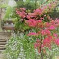 写真: 鎌倉ハイキング-3-