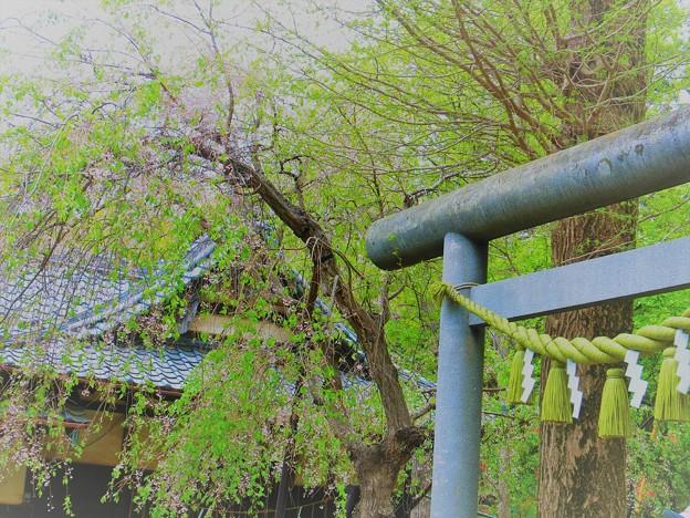 鎌倉ハイキング-4-
