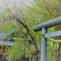 写真: 鎌倉ハイキング-4-
