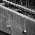 写真: 給水所・・