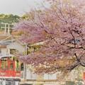 Photos: 風祭は桜まつり