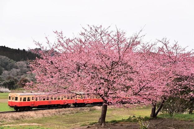 桜と小湊鉄道