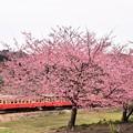 Photos: 桜と小湊鉄道