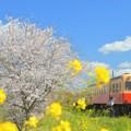 Photos: 春色のきしゃに乗って