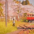 Photos: Spring Spring