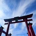 弥彦神社の大鳥居でけぇ!