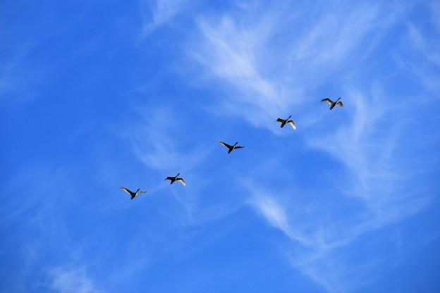 渡り鳥だなぁ