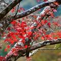Photos: 雨の日の紅葉 (1)