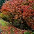 Photos: 雨の日の紅葉 (2)