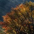 雨上がりの紅葉 (2)